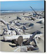 Ocean Coastal Art Prints Driftwood Beach Canvas Print by Baslee Troutman