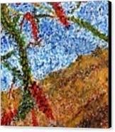 Ocotillo In Bloom Canvas Print