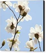 Office Art Prints Blue Sky White Magnolia Flowers 38 Giclee Prints Baslee Troutman Canvas Print
