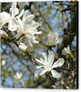 Office Art Prints Magnolia Tree Flowers Landscape 15 Giclee Prints Baslee Troutman Canvas Print