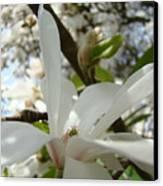 Office Art Prints White Magnolia Flower 6 Giclee Prints Baslee Troutman Canvas Print