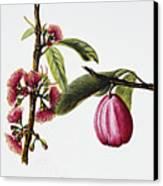 Ohiaai Canvas Print