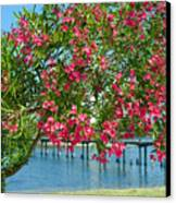 Oleander On Melbourne Harbor In Florida Canvas Print