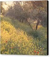 Olive Grovetuscany Canvas Print