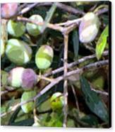 Olives Canvas Print by Mindy Newman