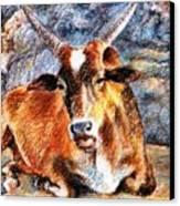 Om Beach Bull Canvas Print by Claudio  Fiori