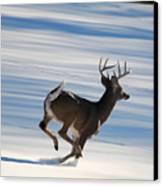 On The Run Canvas Print by Todd Hostetter