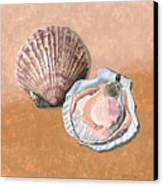 Open Scallop Canvas Print