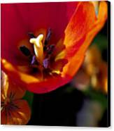 Orange Delight Canvas Print by Don  Wright