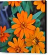Orange Flowers Canvas Print by Lori Kesten