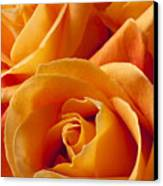 Orange Roses Canvas Print by Garry Gay