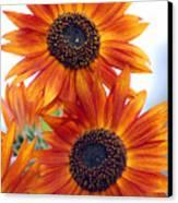 Orange Sunflower 2 Canvas Print
