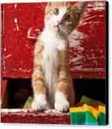 Orange Tabby Kitten In Red Drawer  Canvas Print