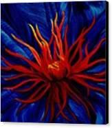 Orange Tango Canvas Print