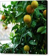 Orange Tree Canvas Print by Lorraine Devon Wilke
