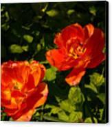 Orange Tulips In My Garden Canvas Print