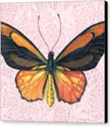 Oranged Birdwing Canvas Print