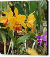 Orangepurple Orchids Canvas Print