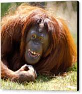 Orangutan In The Grass Canvas Print by Garry Gay