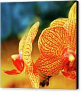 Orchid 9 Canvas Print by Chaza Abou El Khair