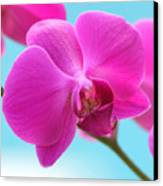 Orchid At The Ocean Closeup Canvas Print