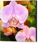 Orchid Bloom Canvas Print