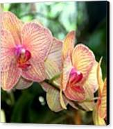 Orchid Delight Canvas Print by Karen Wiles