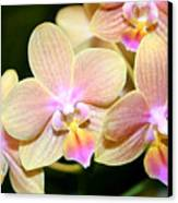 Orchid Group Canvas Print