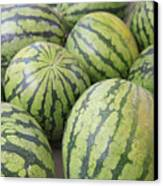 Organic Watermelon Canvas Print by Wendy Connett