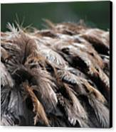 Ostrich Feathers Canvas Print