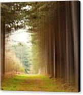 Out Of Woods Canvas Print by Svetlana Sewell