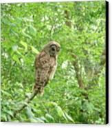 Owl II Canvas Print
