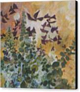 Oxalis Canvas Print