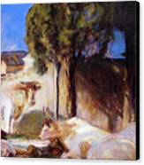 Oxen Resting Canvas Print