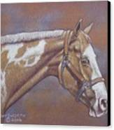 Paint Horse Canvas Print by Dorothy Coatsworth