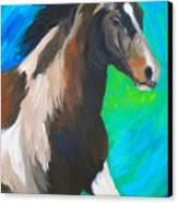 Painted Pony Canvas Print