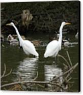 Pair Of Egrets Canvas Print by George Randy Bass