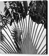 Palm Frons Canvas Print