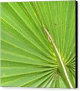 Palmetto II Canvas Print