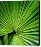 Palmgreen Canvas Print
