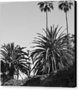 Palms2 Canvas Print