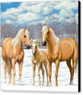 Palomino Horses In Winter Pasture Canvas Print by Crista Forest