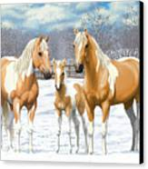 Palomino Paint Horses In Winter Pasture Canvas Print