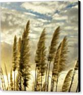 Pampas Grass Canvas Print