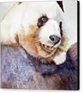 Panda Eating Canvas Print by Bonnie Rinier