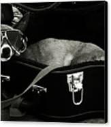 Panhandling Dog Canvas Print by Julie Niemela