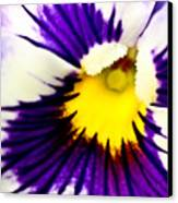 Pansy Violets Canvas Print by Ryan Kelly