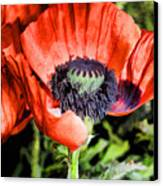 Papaver Canvas Print
