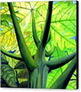 Papaya Tree Canvas Print