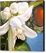 Parfum D Canvas Print